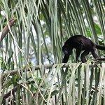 Foto de Monkey Island