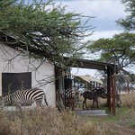Photo de Nieleze Serengeti Camp