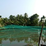 Photo of Alleppey 3 Palms Guesthouse