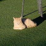 "Meet ""Kater""- the cat :-)"
