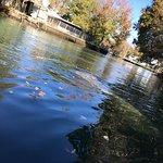 Hampton Inn Crystal River Foto