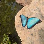 Papillon en train de mourir..