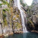 Kenai Fjords Tours Foto
