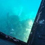 Reef Experience Foto