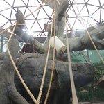 Two female orangutans enjoy their indoor enclosure