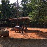 Nakhon Ratchasima Zoo Foto