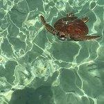Photo de Moorea Dolphin Center