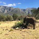 Fairy Glen Private Game Reserve Bild