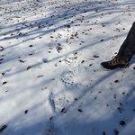 bear traces