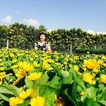 Sadec Flower Village