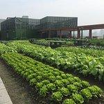 Fresh vegetables on top