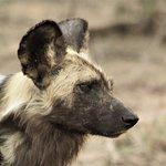 Londolozi Private Game Reserve Photo