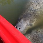 A Day Away Kayak Tours Foto