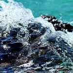 Pakleni Islands Foto