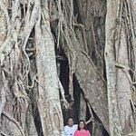 Canlaon City - Century Tree Dalakit