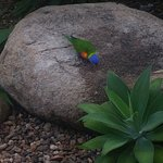 Daily feedings of the loud and colourful Rainbow Lorikeets