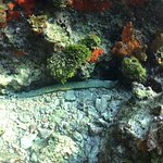 Eel spotted right out front of Condumel while snorkelling!