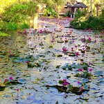 Lotus Pond from the Sala