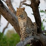Leopard sighting on our first evening