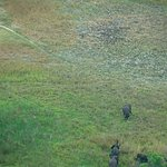Elephants seen from the flight into Vumbura