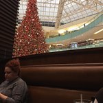 View of the tree and glass dome from our seat