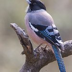 Birding @ Jungle Lore