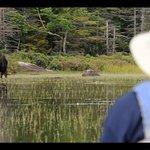 Success! Moose Watching Tour!