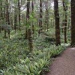 Wald auf dem Kepler Track