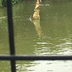 Photo de Jong's Crocodile Farm & Zoo