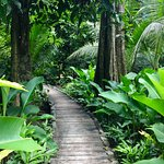 Entrance to the Jungle Spa