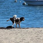 Brand Point Beach just steps from the inn. Harbor view and great facilities for our dog!