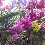 ferme orchidee mae sa