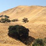 The expansive grassy hills of Black Diamond Mines Regional Preserve