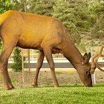 Photo de Best Western Premier Grand Canyon Squire Inn
