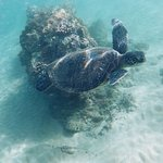 Great place to see turtles in the morning