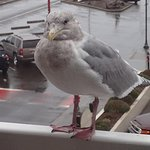 Even the seagulls are friendly at the Looking Glass Inn!