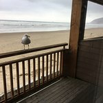 Seagull waiting for a snack. Cannon Beach, OR.