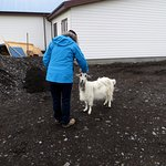 Friendly goat came for a walk with us