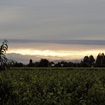 Sunrise from our patio across the vines and the snow-capped Andes