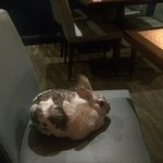 "My rabbit ""Narvik"" relaxing on the comfortable chairs....."