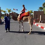 Camel's outside of the hotel