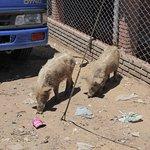 De restjes van de beestenmarkt
