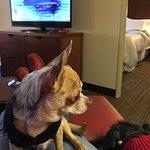 Photo de Four Points Hotel and Suites Kingston