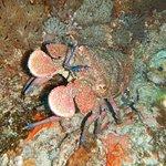Pro Dive Lord Howe Island Foto