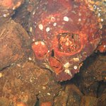 World War II Wreck Dive of Skull in the Engine Room