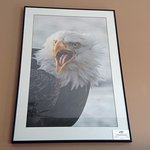 Eagle on the wall.