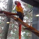 Mackaw Parrot