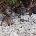 La grotte a chauve-souris en entrant sur Koh Phi Phi en bateau sur la gauche et le park naturel