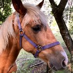 One of the two beautiful horses on the property - a very curious and friendly fellow.