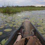 Carefully balanced in the makoro through delta wetlands
